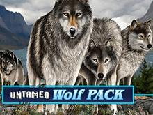 Бонусы слот-автомата Untamed Wolf Pack