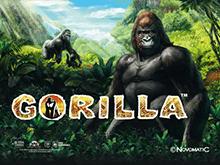 Играть в Gorilla на деньги